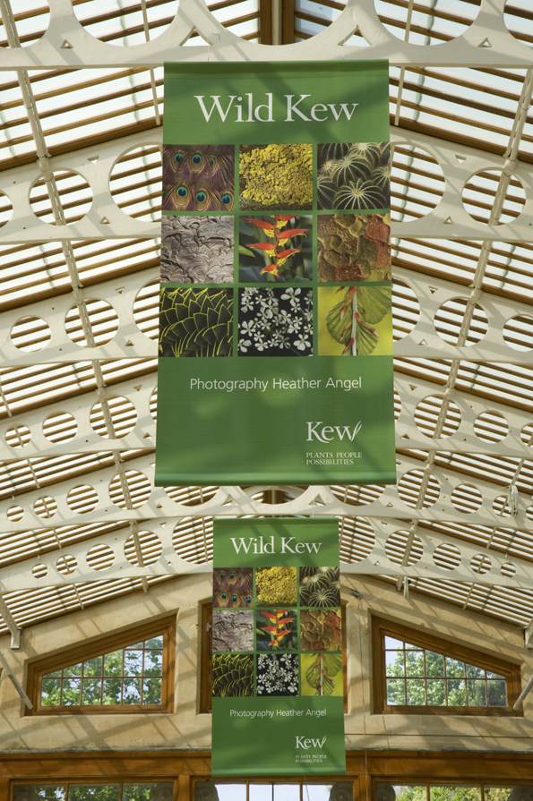 Wild Kew Exhibition in the Nash Conservatory at Kew Gardens in 2011