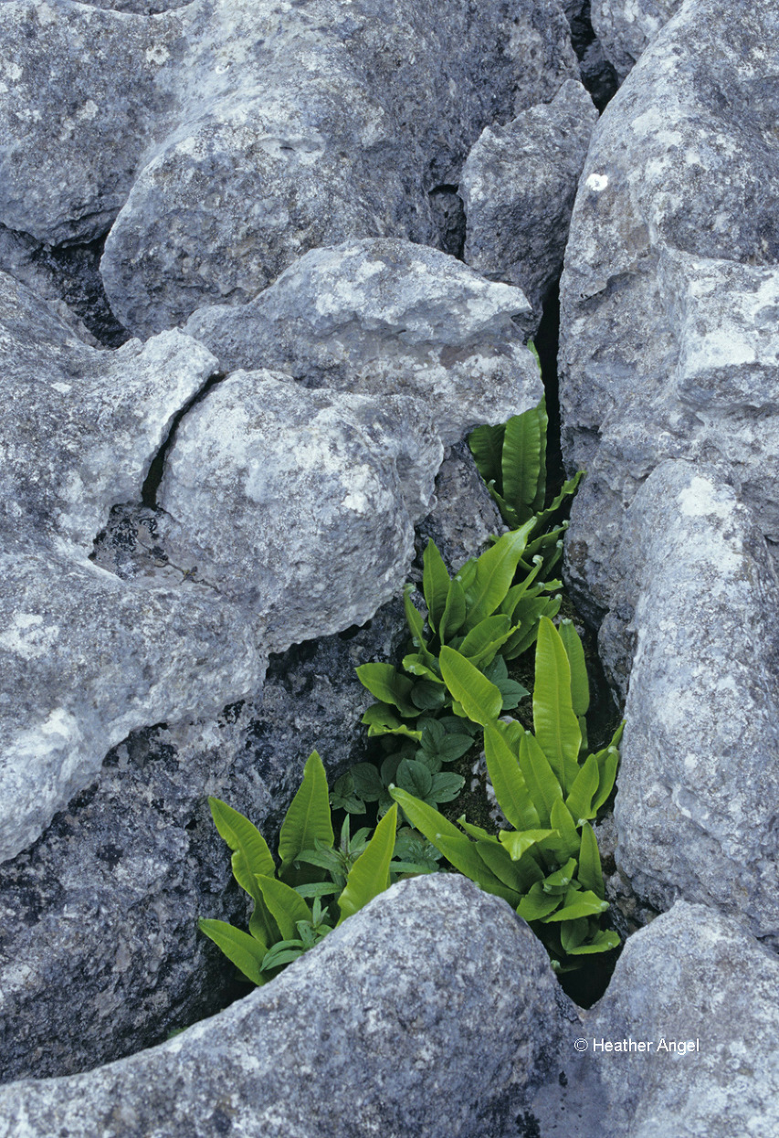 Consider composition Green ferns add colour contrast in curvaceous diagonal rock crack